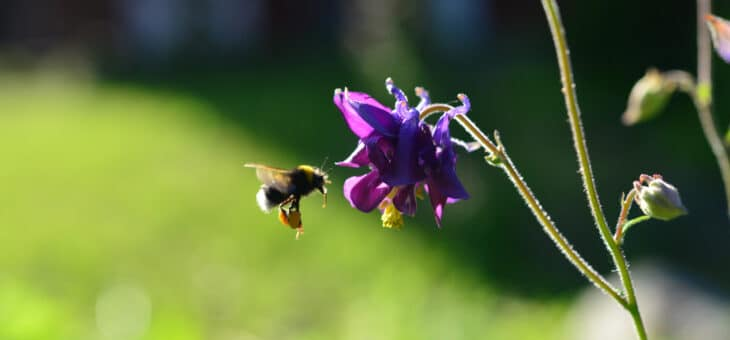 Bamse räddar bina tillsammans med Naturskyddsföreningen